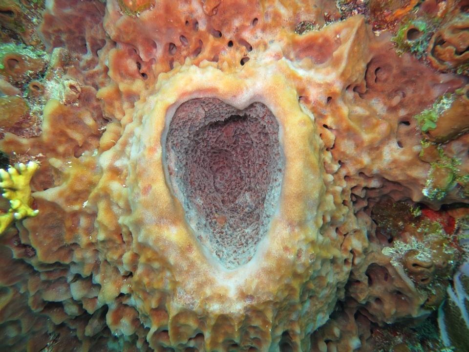 Unterwasserherz