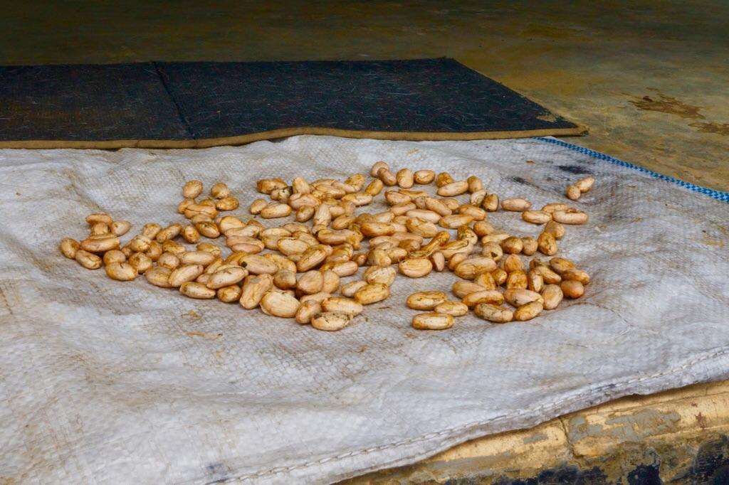 Kakaobohnen. Grundnahrungsmittel für Schokomonster wie mich!