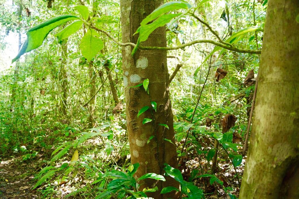 Grüner Dschungel