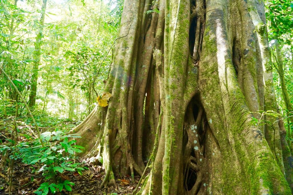 Noch ein Ficus Benjamin