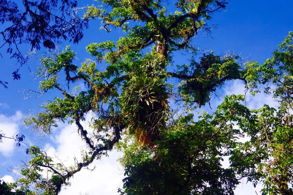 Farne im Baum