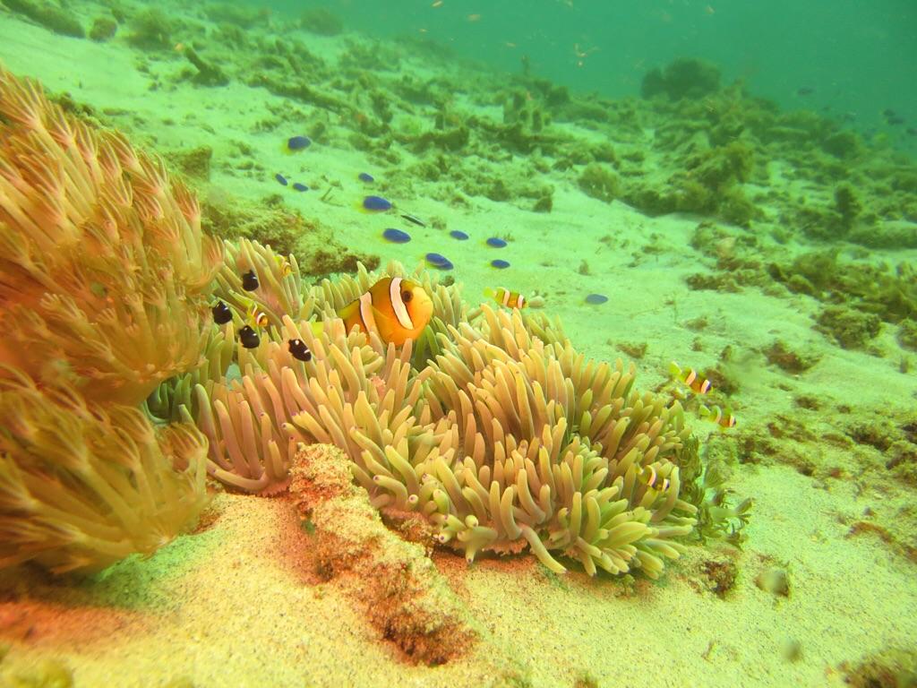 Finde Nemo!