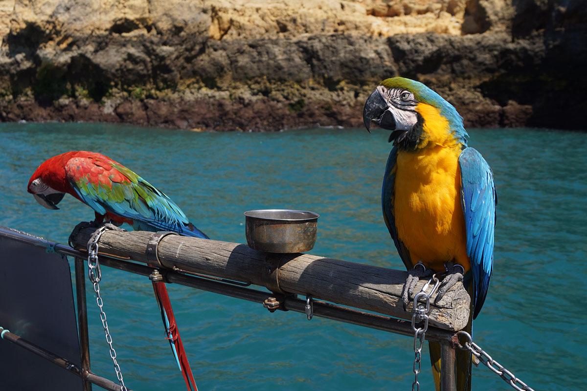 Papageien an Bord